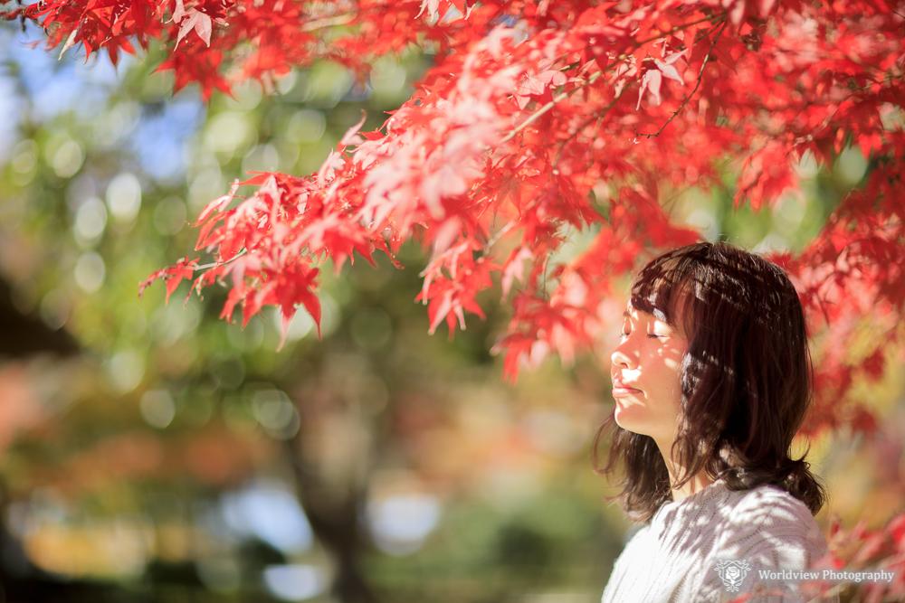 日本の秋って美しいですね